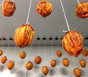 hosigaki-persimmons2